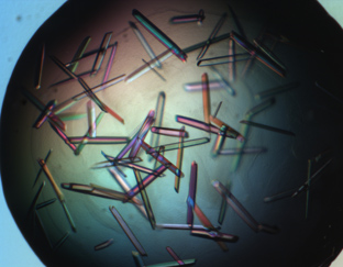 Crystals of mirrored proteins (2009)